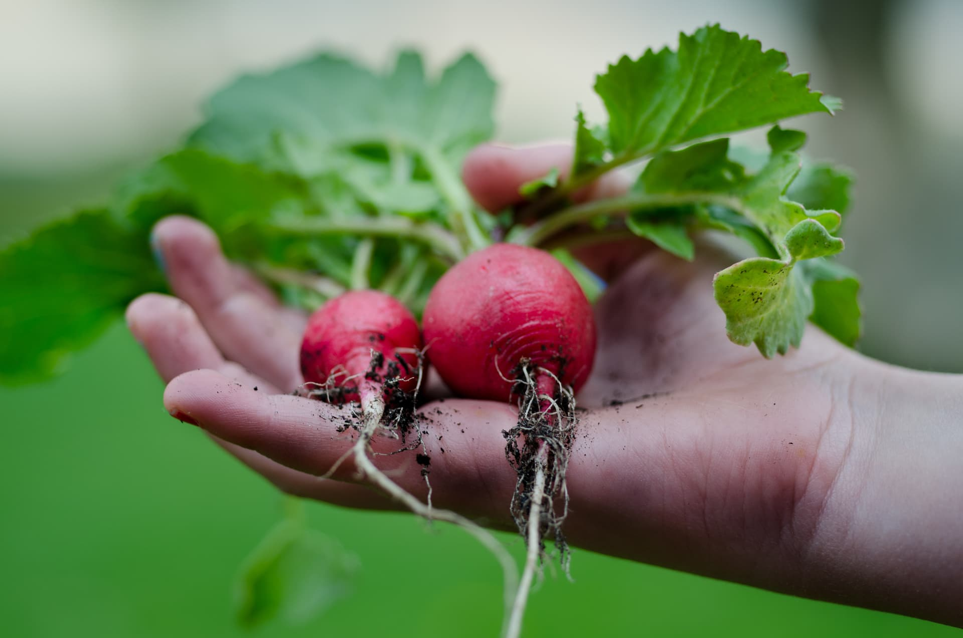 How to Buy Local and Seasonal Food