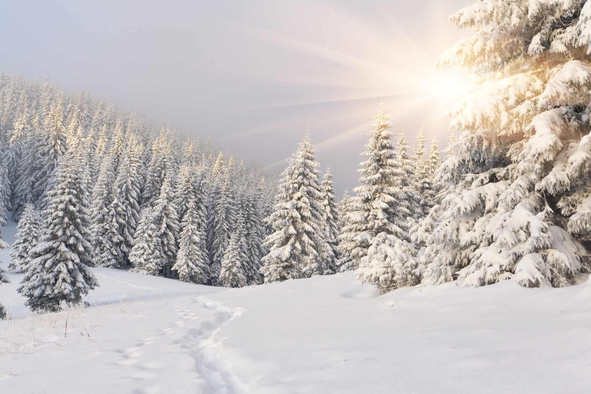 Winter-solstice-snowy-scene